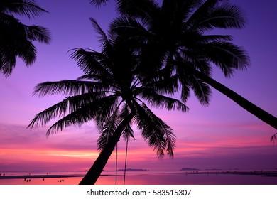Ko samui, Thailand. Silhouette of coconut palm tree on the beach at twilight.