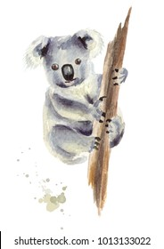 Koala bear sitting on a tree branch, isolated on white background. Watercolor hand drawn illustration