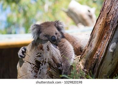 Twelve Apostles South Australia Stock Photo Edit Now 1032451498