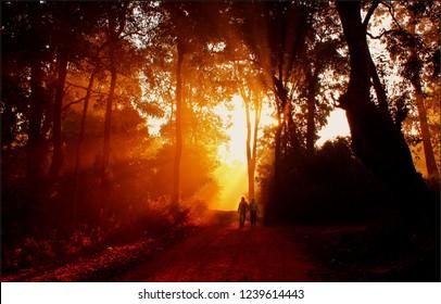 Kodachadri Hill, Shimogga/Karnataka, India-12/28/2016: A trek to Kodachadri Hills