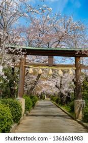 Kofukuji, Kyoto, Japan in spring - Shutterstock ID 1361631983
