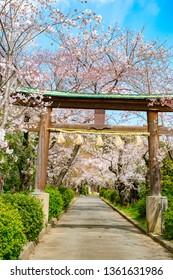 Kofukuji, Kyoto, Japan in spring - Shutterstock ID 1361631986