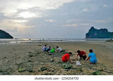 Koh Phi Phi Don, Krabi province, Thailand - April 26, 2017: Thai people picking up crabs on Loh Dalum beach at low tide at sunset.