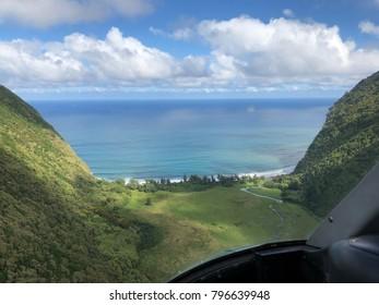 Kohala forest on the big island of Hawaii