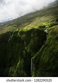 Kohala Forest Reserve, Big Island Hawaii. Shot with GH5 in an avatar like environment.