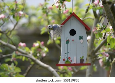 kohlmeise (bird) at nesting box