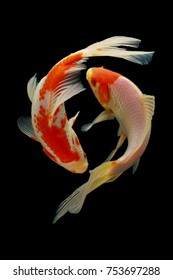 Koi Fish Images Stock Photos Vectors Shutterstock
