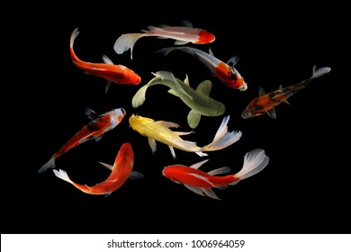 koi images stock photos vectors shutterstock