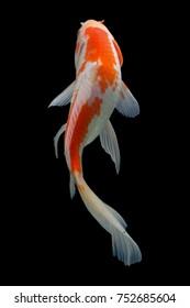 Koi fish Gold, silver, red, black