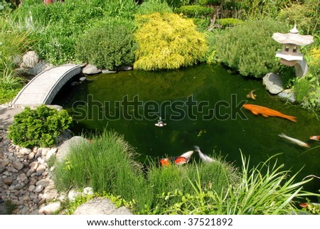 Koi fish in a pond of a beautiful Japanese garden