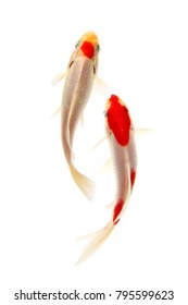 Koi fish Red and white