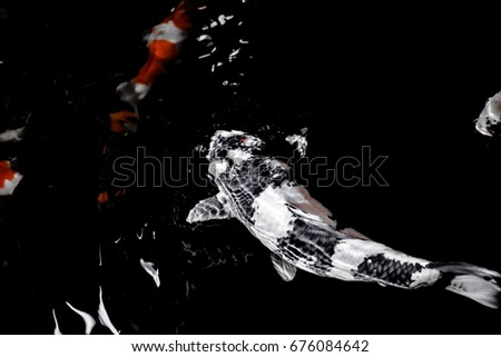 Koi Fish Under Wave Wallpaper Stock Photo Edit Now 676084642