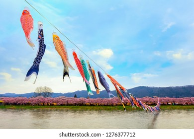 Koinobori carp-shaped windsocks over Kitakami river during fullbloom Cherry Blossom at Kintakami Tenshochi park in Iwate , Japan
