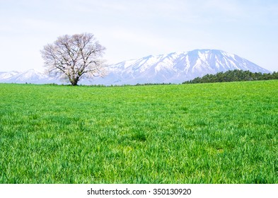 Koiwai farm,morioka city,iwate,tourism of japan