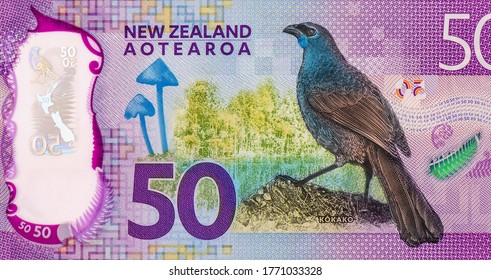 Kokako or blue wattled crow (Callaeas wilsoni), a large native bird with a distinctive bluish-grey body, mushroom (Entoloma hochstetteri), Portrait from New Zealand 50 Dollars 2016 Polymer Banknotes