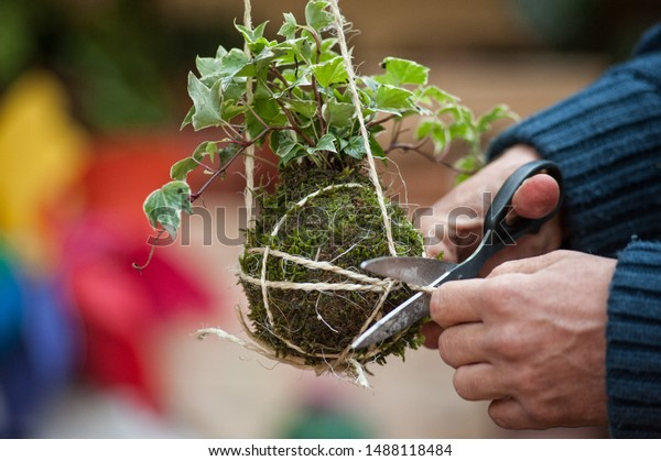 Kokedama is a ball of soil, covered with moss, on which an ornamental plant grows. Is very popular in Japanese gardens.