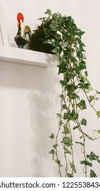 Kokedama a Japanese gardening technique