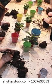 Kokedama plant workshop making