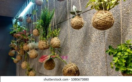 The kokedamas decorated wall panel