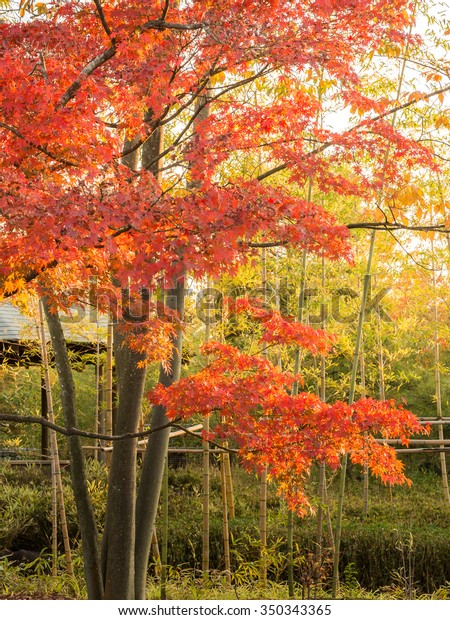 Kokoen Garden Japanese Garden Autumn Red Stock Photo (Edit