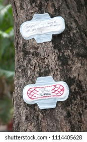 KOLKATA- APRIL 1:Messages written on sanitary pads stuck to different parts of the campus of Jadavpur University as a  protest against sexism and patriarchy on 1st April, 2015 in Kolkata, India.