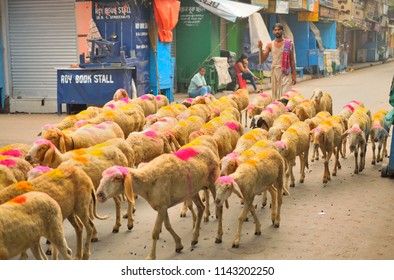 Kolkata, India - April 23, 2017: A shepherd taking his herd of sheep along the road.