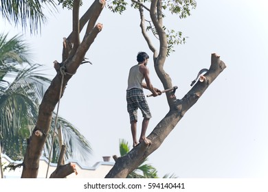 KOLKATA, WEST BENGAL / INDIA - JANUARY 29TH : Unidentified man cutting tree for making space available for urban growth. India is one of the fastest growing nations in the world, shot on 29.01.2017.