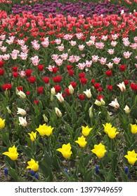 The kolorful spring flowers field - Shutterstock ID 1397949659