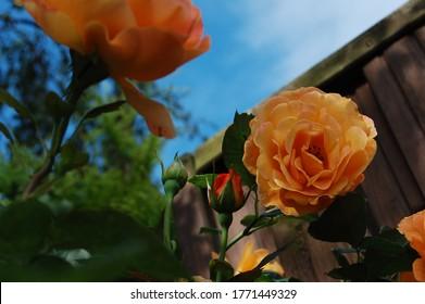 Kolorowe kwiaty. Zdjęcie zrobione o poranku - Shutterstock ID 1771449329