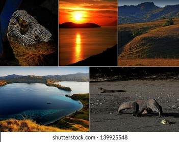 Komodo island national park in Indonesia live dragon collage