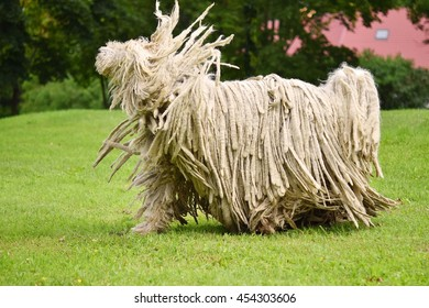Komondor (Hungarian sheepdog) shaking dreadlocks