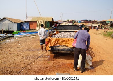 KOMPONG KLEANG, CAMBODIA - FEB 12, 2015 - Men load the days fishing into the back of a truck in Kompong Kleang floating fishing village,  Cambodia