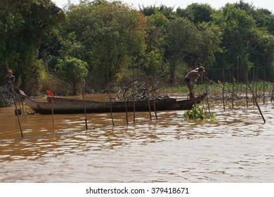 KOMPONG KLEANG, CAMBODIA - FEB 12, 2015 - Fishermen work to clear their fishtraps from water hyacinth and driftwood, Kompong Kleang floating fishing village,  Cambodia