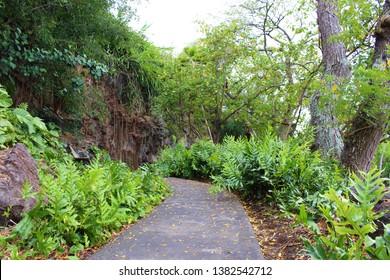 Kona, Hawaii / USA - April 24th, 2019: Walking path along side Keauhou Bay leading to Mo'ikeha cave and Kamehameha III birthplace. Big Island of Hawaii
