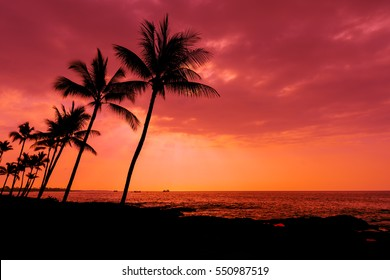 Kona sunset against palm trees on the Big Island Hawaii