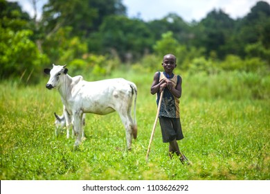 Konshisha LGA, Benue State Nigeria- April 21, 2016: Young African Cattle herder in the fields with his livestock