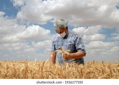 Konya, Turkey - July 15 2020 : Farmer is in golden wheat field. He is wearing medical mask and holding ears of wheat in hand.