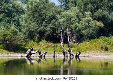 Kopacki Rit Nature Park in Croatia.