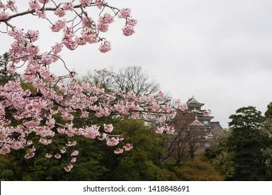 korakuen garden during spring with okayama castle in the background