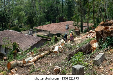 Sandalwood Forest Images, Stock Photos & Vectors | Shutterstock