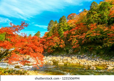 Korankei is a valley near Nagoya reputed to be one of the best spots for autumn colors in the Chubu Region.