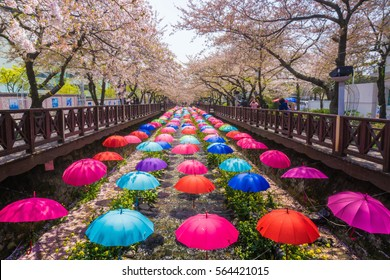 Korea 26 April 2015, Busan City, Beautiful Jinhae Cherry Blossom Festival in South Korea, Yeojwacheon. People visit because this season is beautiful sakura flower along the street.