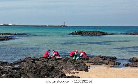 Korea Jeju Island Beach Foraging Seaweed