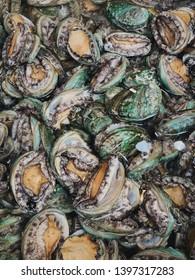 The Korea Seoul Fresh Abalone