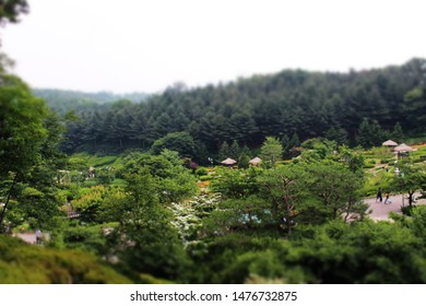 korea or summe or park or tree or natural