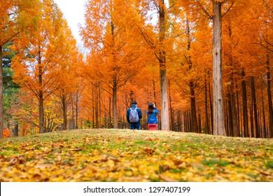 Korean couple walking in nami park in nami island, seoul, South korea