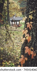 Korean gazebo in the autumn park, red leaves on trees, yellow leaves, fall in park