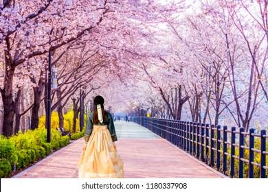 Korean Girls dressed Hanbok.Cherry blossom of Spring in Seoul, South Korea .