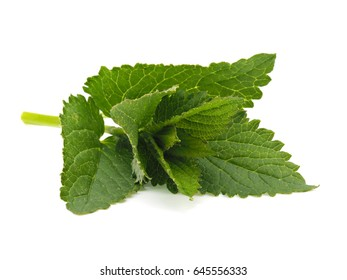Korean mint isolated on white background