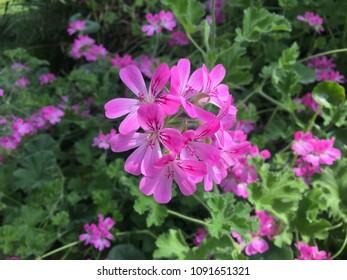 korean spring flowers  - Shutterstock ID 1091651321